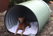 Barrel Dog Kennel