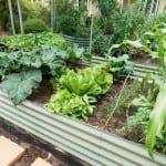 Raised Garden beds – 400 High Pale Eucalypt