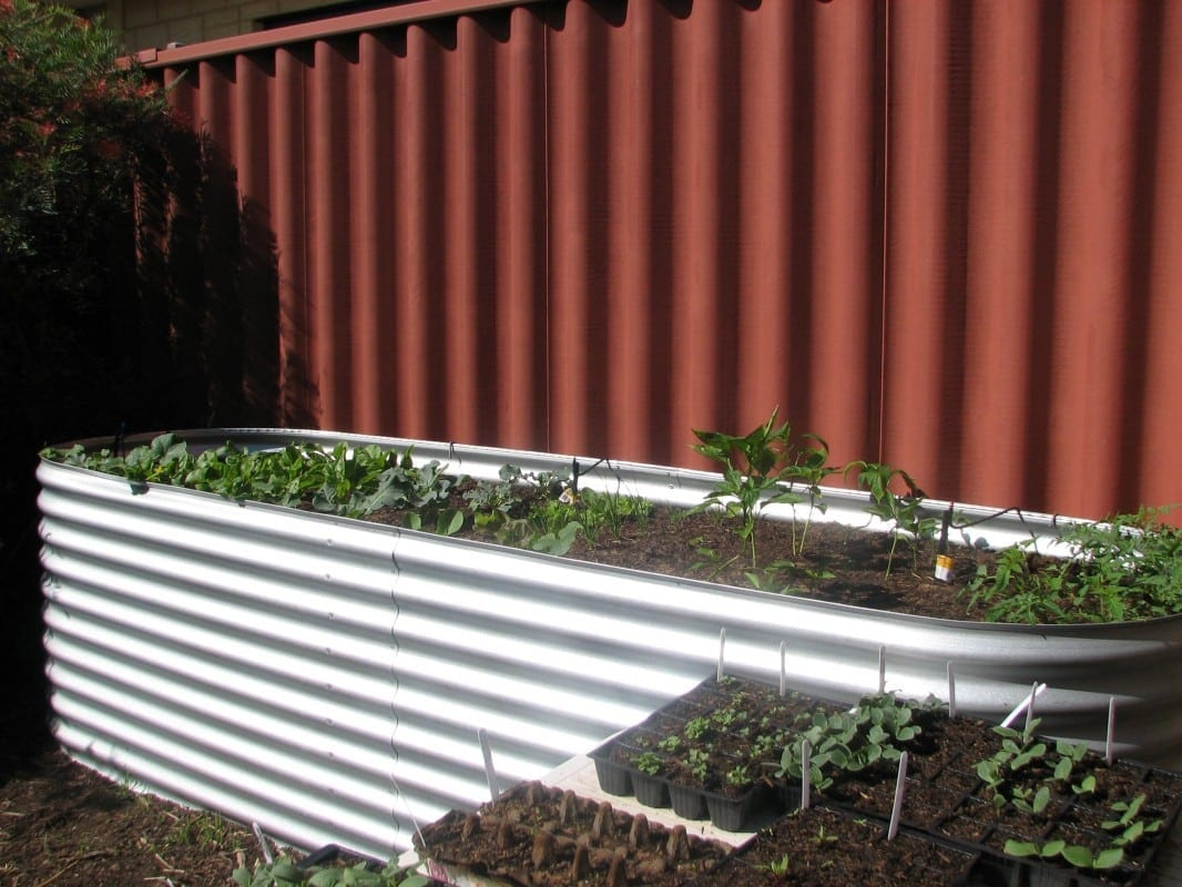 Raised garden beds sydney nambucca valley garden club for Landscape architecture courses perth