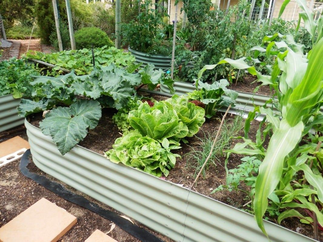 Oblong Raised Garden Bed - 400 High Pale Eucalypt